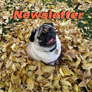 WVMS Newsletter for November 22, 2019